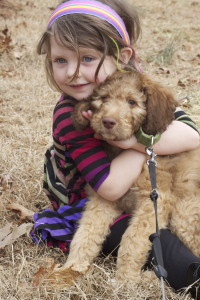 Dog Breeder in Knoxville Tennessee, Puppies for Sale in Knoxville, Knoxville Puppies for sale, for sale, Knoxville for sale, Rafa -- 9 Weeks