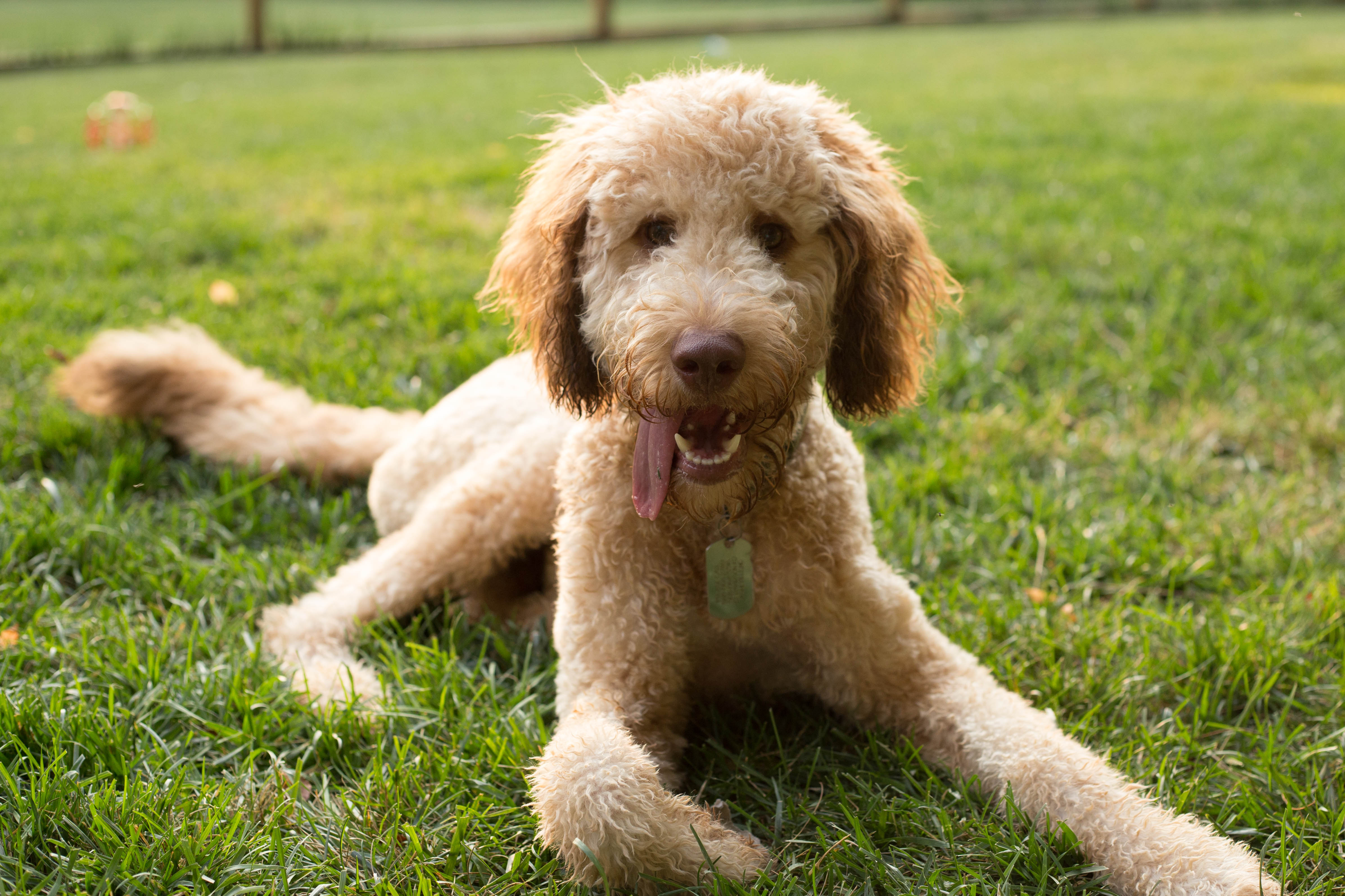 Dog Breeder In Knoxville Tennessee